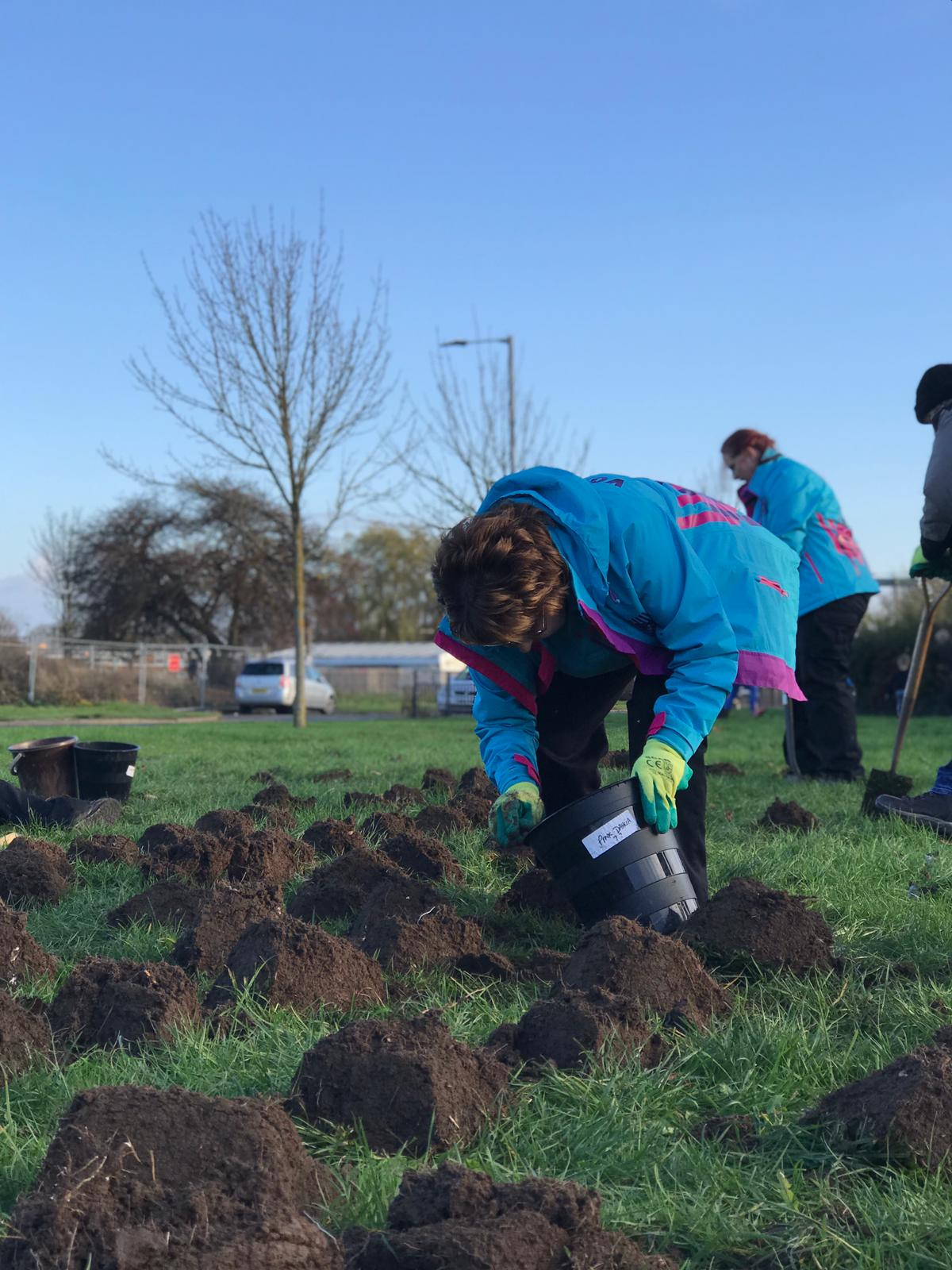 Tulips are coming! Volunteers launch new community project